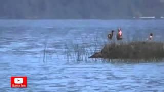 getlinkyoutube.com-Extraña criatura es captada por turistas en un lago de Chile TIENES QUE VERLO!