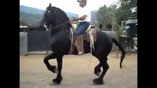 getlinkyoutube.com-CABALLOS BAILADORES
