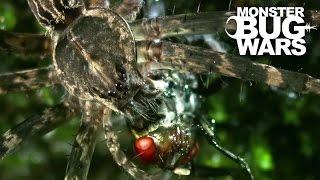 getlinkyoutube.com-Water Spider Vs Water Strider | MONSTER BUG WARS