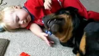 getlinkyoutube.com-Baby's Best Friend, his Rottweiler