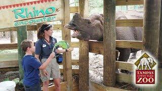 Rhino Encounter at Tampa's Lowry Park Zoo