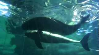 Dolphin Reproduction www.aquawiadomosci.pl