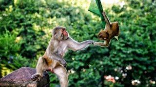 getlinkyoutube.com-Monkey Temple - Swayambhunath in 4K! | DEVINSUPERTRAMP