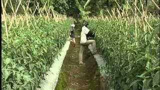 getlinkyoutube.com-Bioteknologi Pertanian di Indonesia (Bahasa Subtitle)