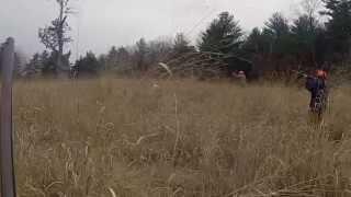 getlinkyoutube.com-Hunting pheasant with a 410 shotgun