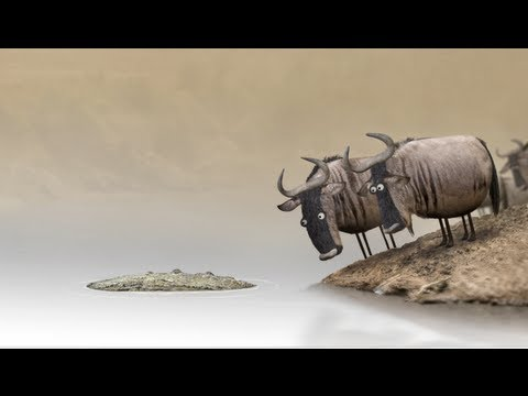 Wildebeest from Bird Box Studio