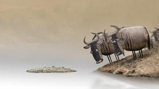 【牛羚 Wildebeest】【Yao】