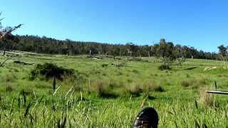 getlinkyoutube.com-Hunting Wild Dogs in Australia.