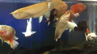 Monster 600 Gallon Fish Tank Feeding & Update