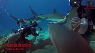 Shark Feeding Arena