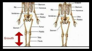 getlinkyoutube.com-Grow longer legs naturally without surgery