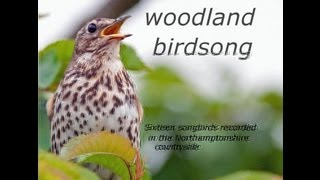 getlinkyoutube.com-Woodland Birdsong: Sixteen Glorious Songbirds