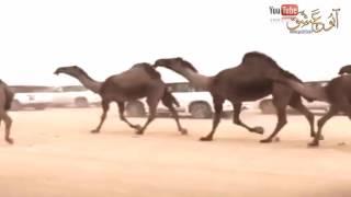 getlinkyoutube.com-منقية محمد بن فهاد القحطاني ـ كلمات عبدالهادي المري ـ أداء محمد ال نجم ـ جديد وحصري HD