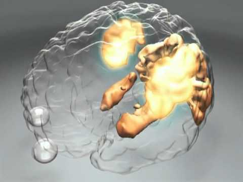 How Does the Brain Work? - Human Cognition