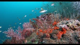 getlinkyoutube.com-4K Underwater Indonesia: Marine Biodiversity (UltraHD Nature & Wildlife Stock Footage Demo Reel)