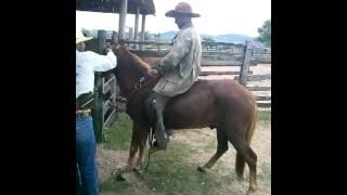 getlinkyoutube.com-montaria em burro fazenda mirante