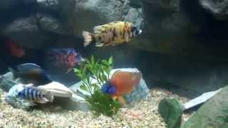 getlinkyoutube.com-125 gallon Aquarium Universal Rocks 3D Background