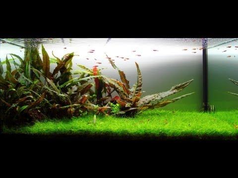 Freshwater Planted Aquarium - Mystic | 迷