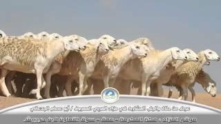 getlinkyoutube.com-عرض الفواخر من مراح المربي المعروف / أبو عصام الجدعاني 0504591708