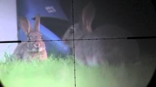 getlinkyoutube.com-Devon AirGunner August rabbit hunt with Weihrauch HW100