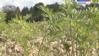 Быть фермером выгодно: это доказал агроном из Сокольского района