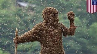 getlinkyoutube.com-رجل يموت على إثر اصطدام سيارته ببيت يحتله النحل