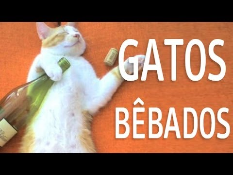 Os gatos mais engraçados BÊBADOS (Funny Cats)