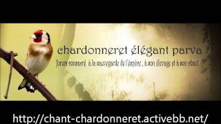 getlinkyoutube.com-chant chardonneret d'Algerie Royal top chant complet !!! http://chant-chardonneret.activebb.net/