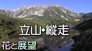 北アルプス・花と展望の立山縦走ガイド