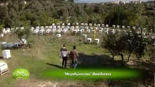 getlinkyoutube.com-Βασιλοτροφείο - Μέλισσες