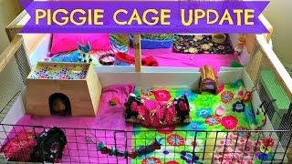 getlinkyoutube.com-Guinea Pig Cage Updates! June 2014