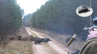 getlinkyoutube.com-Drückjagd in Polen - polowanie na dziki- vildsvinsjakt - driven hunt Chasse Au Sanglier drivjakt