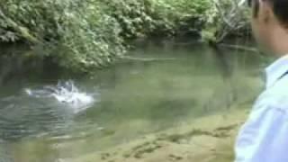 へち際のフライフィッシング(日光湯川)