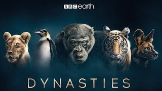 Dynasties: First Look Trailer | New David Attenborough Series | BBC Earth width=
