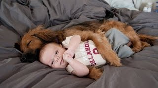 getlinkyoutube.com-Funny Dogs Protecting Babies Compilation 2015