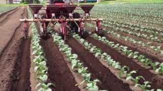 getlinkyoutube.com-今日の農作業