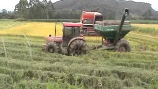 getlinkyoutube.com-Colhendo arroz em casca