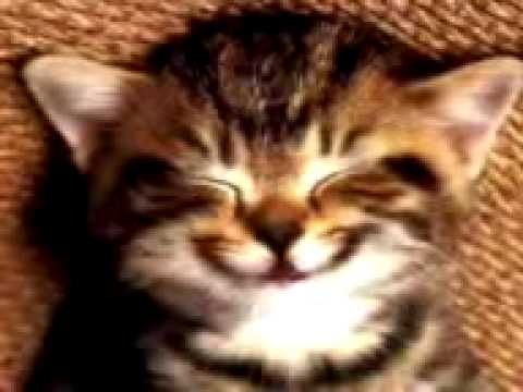 Videos Related To 'un Gato Cantando La Cancion Del Cumpleañ