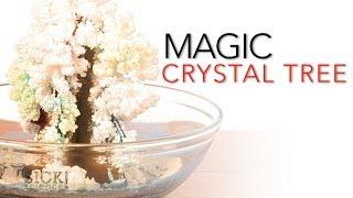 getlinkyoutube.com-Magic Crystal Tree - Sick Science! #065