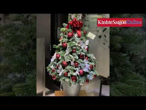 50 triệu đồng cây thông tươi nhập khẩu, xu hướng mới dịp Giáng sinh