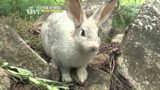 getlinkyoutube.com-TV 동물농장 466회_08