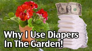 getlinkyoutube.com-Why I Use Disposable Diapers In The Garden!