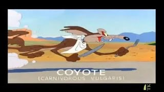 getlinkyoutube.com-Best of Coyote and Roadrunner (2) - Cartoon (english)