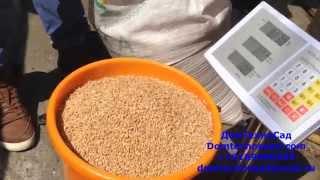 getlinkyoutube.com-Зернодробилка Зубр Экстра зерно, пшеница, бобы, кукуруза и т.п. - 500 кг/ч