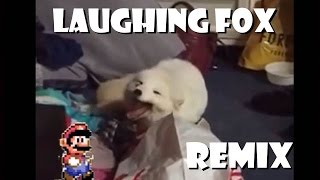 getlinkyoutube.com-Cute White Fox Laughing - Remix Compilation