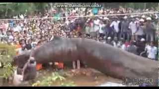 getlinkyoutube.com-Huge monster in vietnam