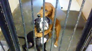 getlinkyoutube.com-感動 犬 殺処分を目前に、檻の中で抱き合う「2匹の犬」が全米で話題に!2匹の運命は…