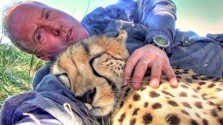 getlinkyoutube.com-Taking A Nap With Loving Female Cheetah - Cat Cuddles & falls Asleep In Man's Arms -Needs Baby Binky