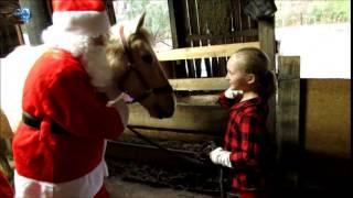getlinkyoutube.com-CHRISTMAS HORSE