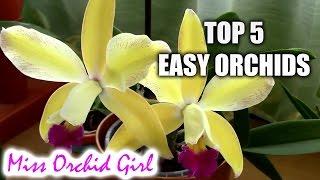 getlinkyoutube.com-Top 5 orchids for beginners